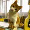 首を傾げる猫って普通なの?の画像
