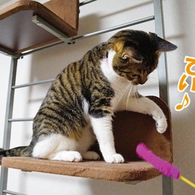 猫の肉球はちょっと開くの記事に添付されている画像