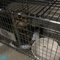 F2町の地域猫活動〜苦戦する捕獲〜の記事に添付されている画像