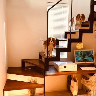 建築家住宅vs大手ハウスメーカーvs工務店住宅の記事に添付されている画像