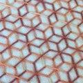 #段染め糸の画像