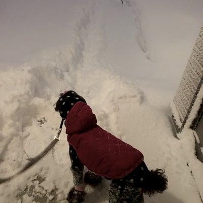 大雪の記事に添付されている画像