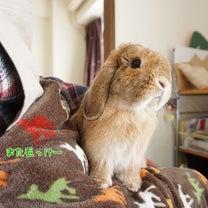春の綿帽子 【オマケ追記あり】の記事に添付されている画像