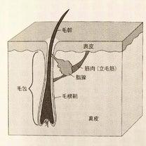 脂と油の記事に添付されている画像