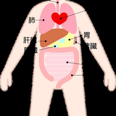 腸の動きが悪いと呼吸が浅くなることもありますの記事に添付されている画像
