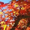 きょうは千葉の家。季節外れの紅葉