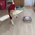 #大型犬のいる暮らしの画像