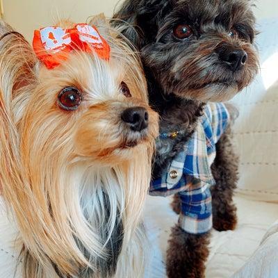 犬にも衣装 〜モンちゃん編〜の記事に添付されている画像