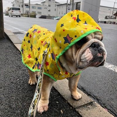 1月20日の朝散歩と招福犬の記事に添付されている画像