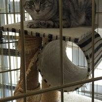お預かり猫ちゃんのご様子の記事に添付されている画像