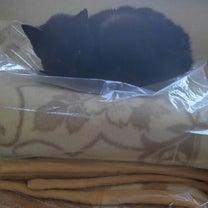 岩槻猫5匹を保護をしましたの記事に添付されている画像