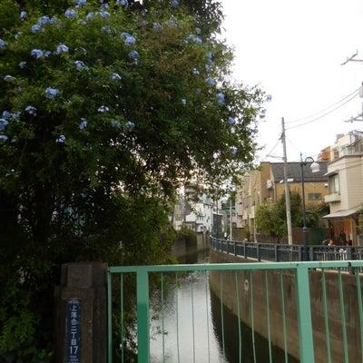 東京の着物の生産地は都内に2箇所 型染めの記事に添付されている画像