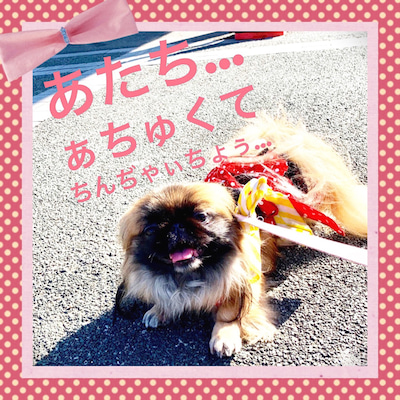 おでかけ~①*\(^o^)/*の記事に添付されている画像