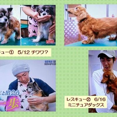 志村どうぶつ園の美人トリマーさんの記事に添付されている画像