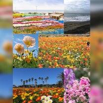 """春になったら(後編)…お花畑♡""""やがて、悲しみなんて忘れてしまう♡""""の記事に添付されている画像"""