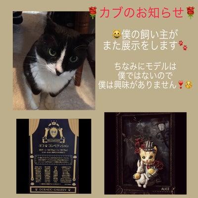 ♣展示のお知らせ「ネコ★コンペティション」の記事に添付されている画像