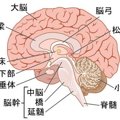 潜在意識アロマ(R)とは~嗅覚だけが違ってる~【誕生話1】の記事に添付されている画像