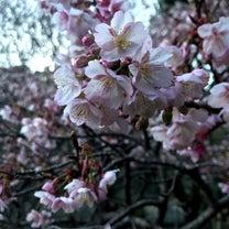 もう桜の記事に添付されている画像