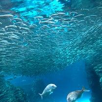 高温期2日目◎水族館の記事に添付されている画像