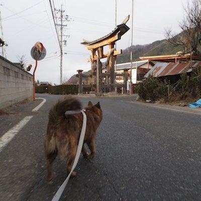 クマさんの山道散歩の記事に添付されている画像