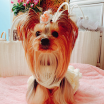 犬にも衣装 〜ティーさん編〜の記事に添付されている画像