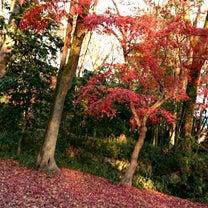 ♪京都♪の記事に添付されている画像