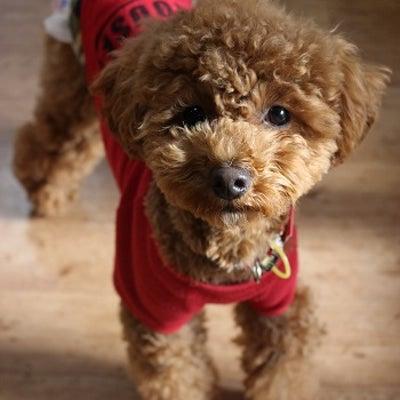 1/20 本日のお客様&ホテル犬ももちゃん&モコちゃん♪の記事に添付されている画像