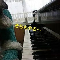 犬のピアノの記事に添付されている画像