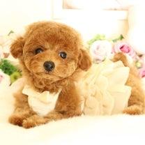 11月15日生まれ♡  タイニー予想の女の子♡の記事に添付されている画像