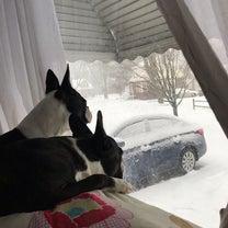 朝から雪かきDay。( ^)o(^ )の記事に添付されている画像