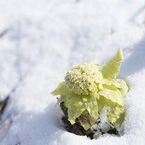 獅子座満月~立春~旧正月真の新しい新年へ向けての記事に添付されている画像