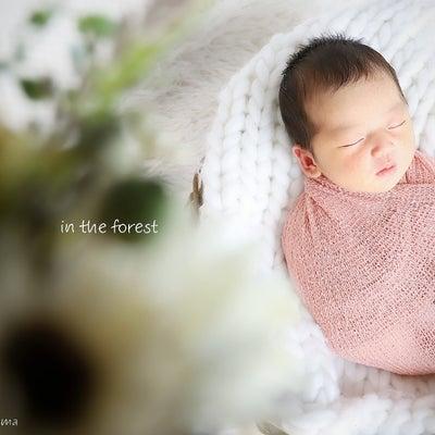 眠れる森の美女の記事に添付されている画像