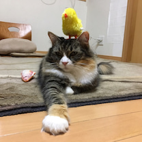 乗せ猫の記事に添付されている画像