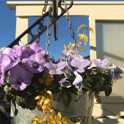 今日のお花たち、寄せ植えした多肉とミニバラの様子の記事に添付されている画像