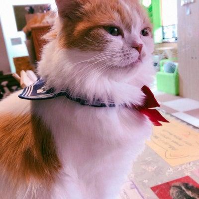 香川 高松の猫カフェ ねこ茶  ねこ茶、明日でやめるってよ!?の記事に添付されている画像