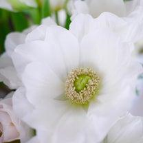 真っ白な春のお花で╰(*´︶`*)╯♡の記事に添付されている画像