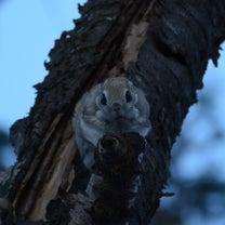 モモンガの住む森へ・・・4の記事に添付されている画像