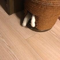 保護ネコMOMOは、手作り爪研ぎタワーがお気に入り!の記事に添付されている画像