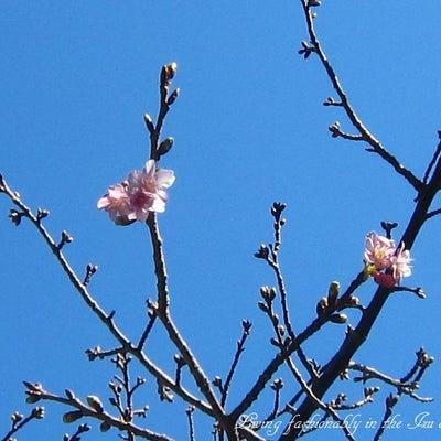 《寄せ植え》おばさん流  根の回った花木の植え替えの記事に添付されている画像