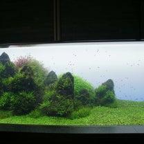 第一印象の水族館の記事に添付されている画像