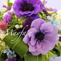 アネモネの花言葉は…の記事に添付されている画像