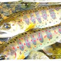 【管釣への誘い】淡水魚challengeを考える2️⃣の記事に添付されている画像