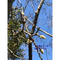 元伊勢 京丹後  福知山 大江町 豊受大神社さんの春を待つ冬の風景の記事に添付されている画像