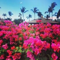 ハワイ州知事からフォロー申請の記事に添付されている画像