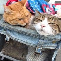 猫ちゃんの記事に添付されている画像