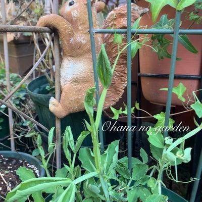 秋まきの種からの成長 part 2の記事に添付されている画像