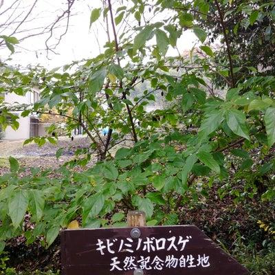 吉備津彦神社3~激レア!謎多き天然記念物の記事に添付されている画像