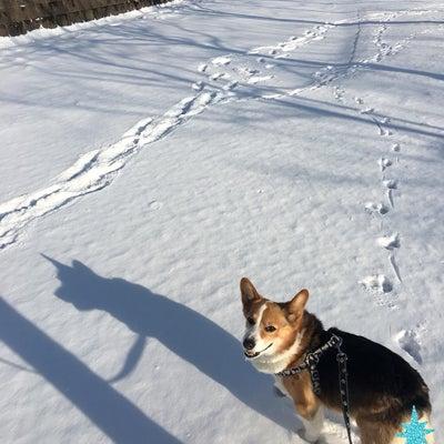 久しぶりの雪と映画館(o´罒`o)の記事に添付されている画像
