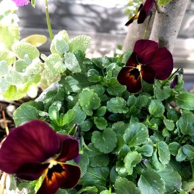 お花たち⑅︎◡̈︎*の記事に添付されている画像