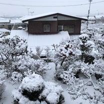 雪の中から…の記事に添付されている画像